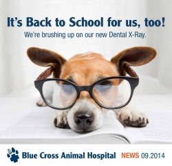 News Updates from Blue Cross Animal Hospital